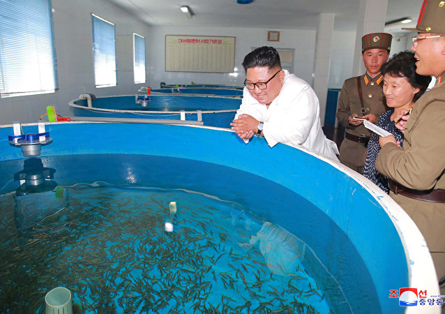 Kim Jong-un et l'économie