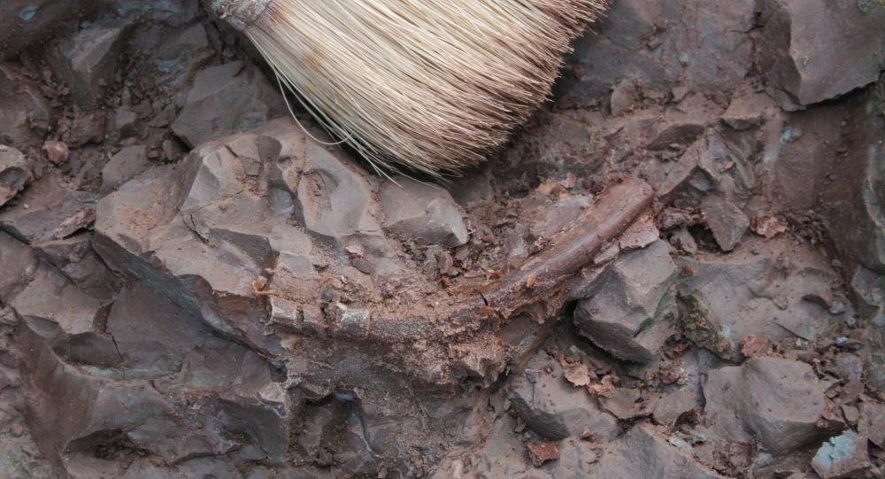 Un charnier contenant les restes de 600 personnes découvert à Brest