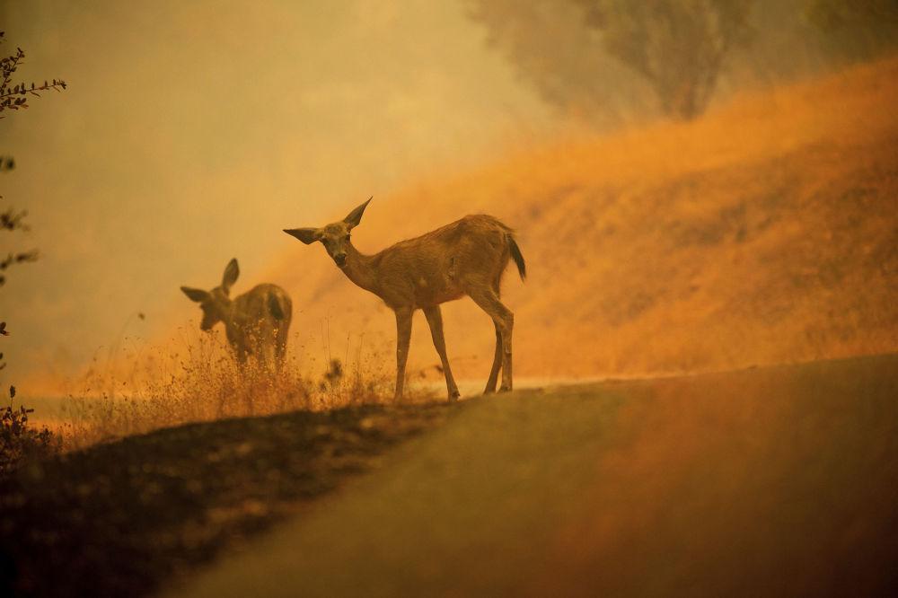 La Californie en feu