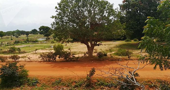 Vue sur les champs du village de Bazoulé