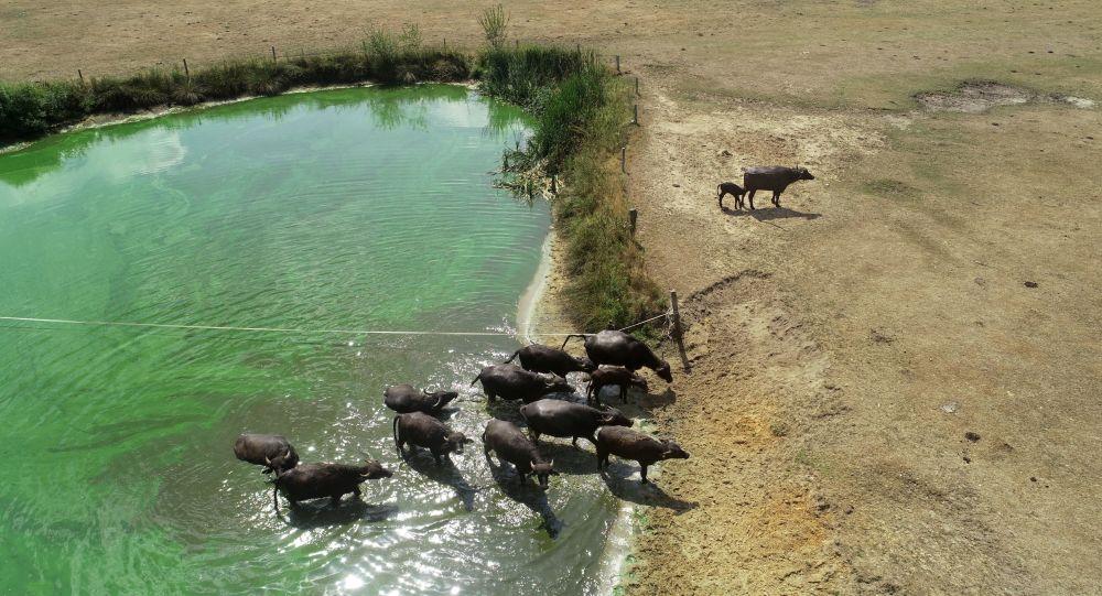 La sécheresse étouffe le monde