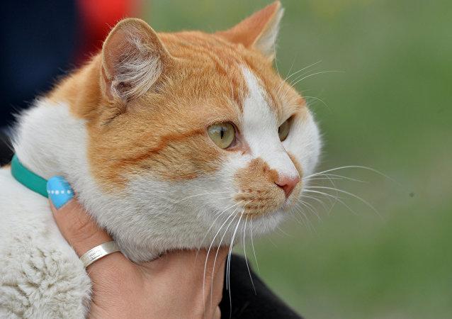 Le chat Mostik (qui signifie en russe pont), la mascotte du pont de Crimée