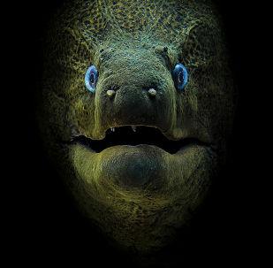 Les gagnants du concours Scuba Diving Magazine's 2018 Underwater Photo Contest