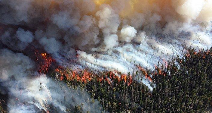 Incendie de forêt (image d'illustration)