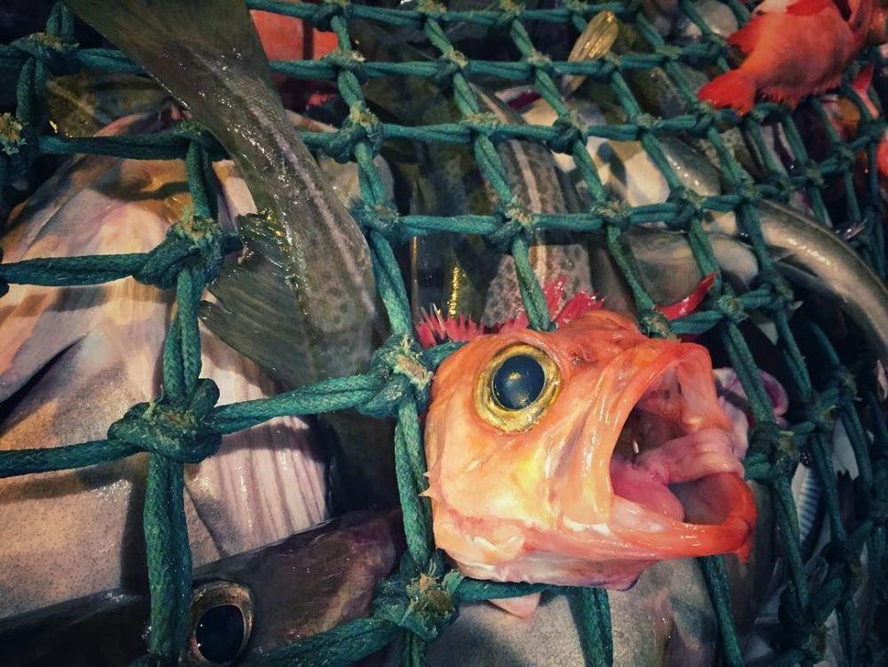 Découvrez ces fabuleux êtres marins des profondeurs