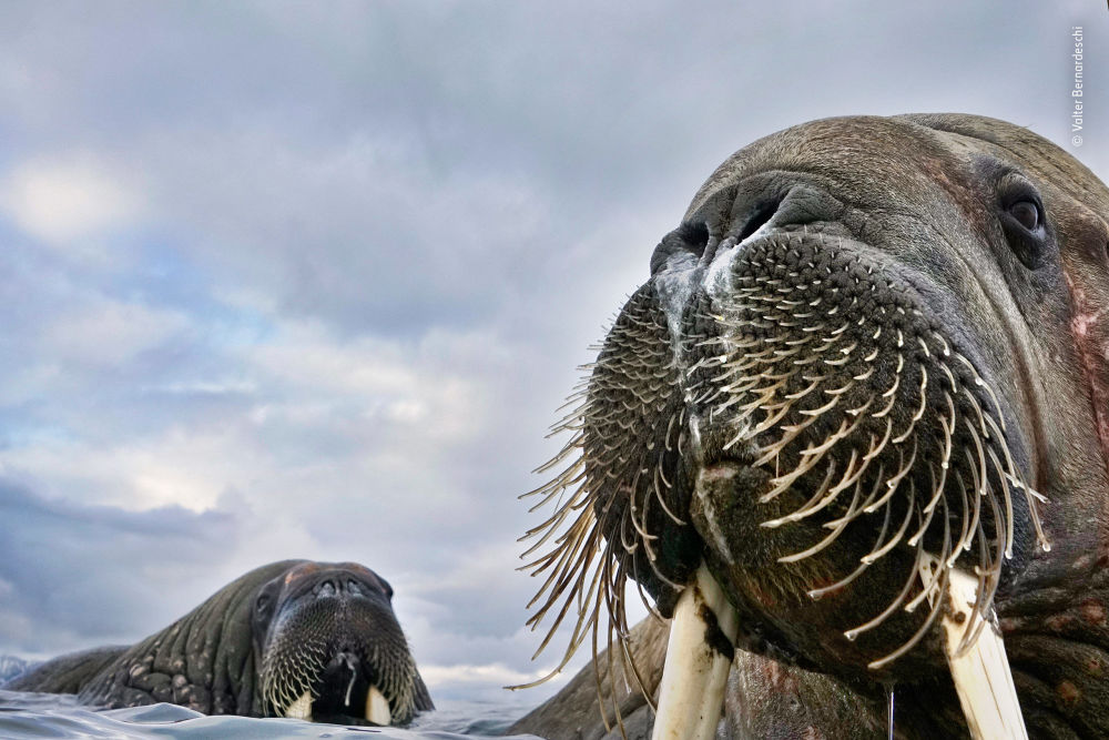 Ce formidable monde sauvage: les finalistes du Wildlife Photographer of the Year