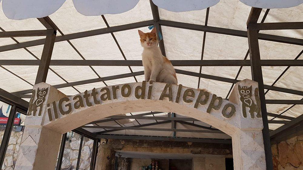 Le refuge de chats à Alep