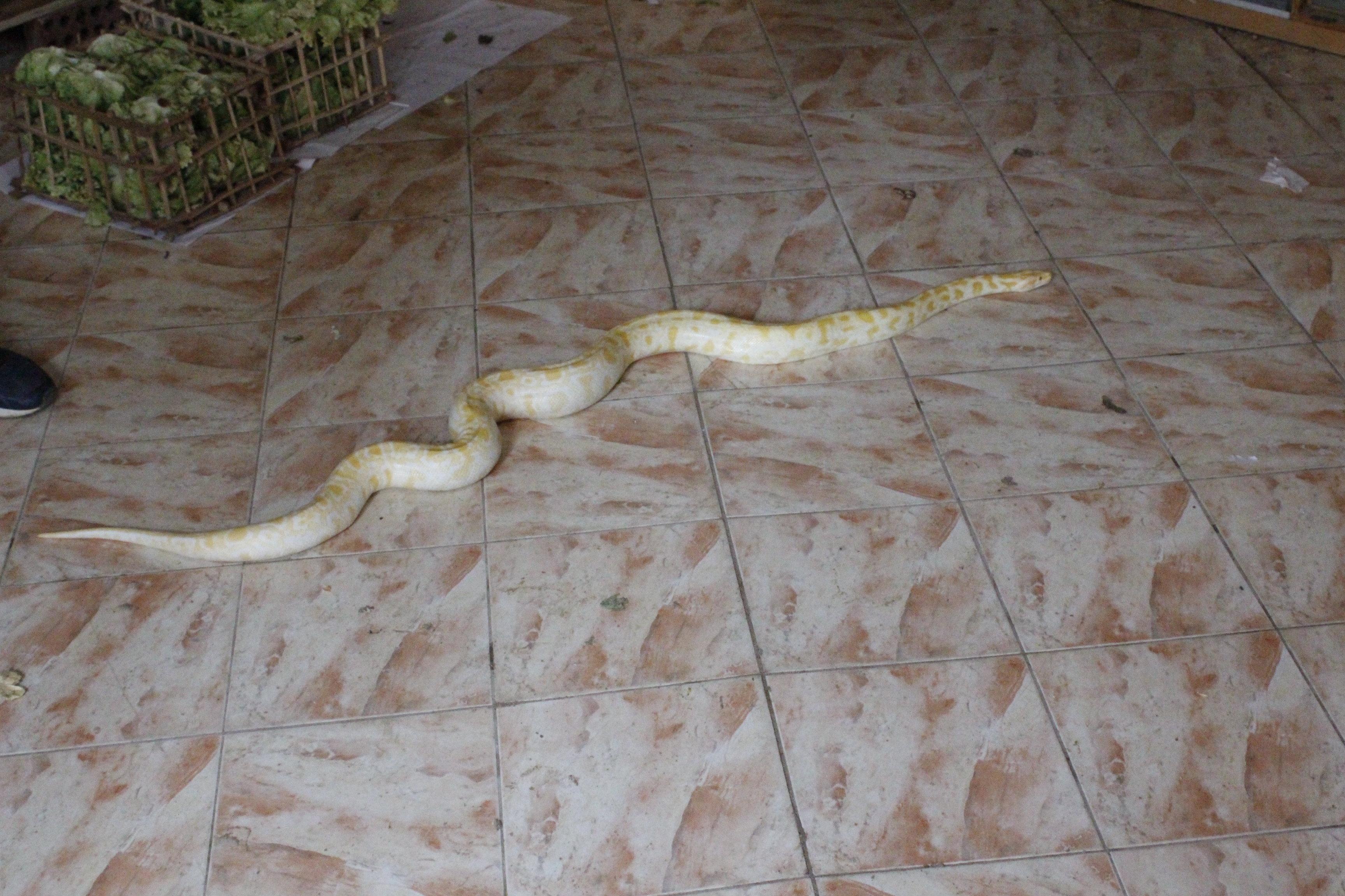 Dans ce village d'Égypte, on chasse et on élève des serpents venimeux depuis 300 ans