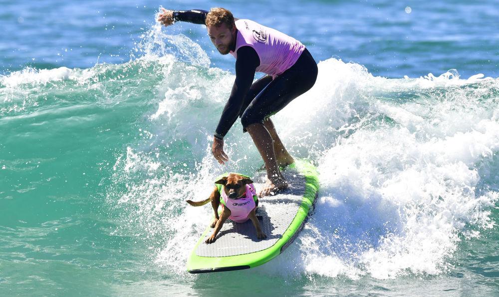 Les compétitions de chiens surfeurs en Californie