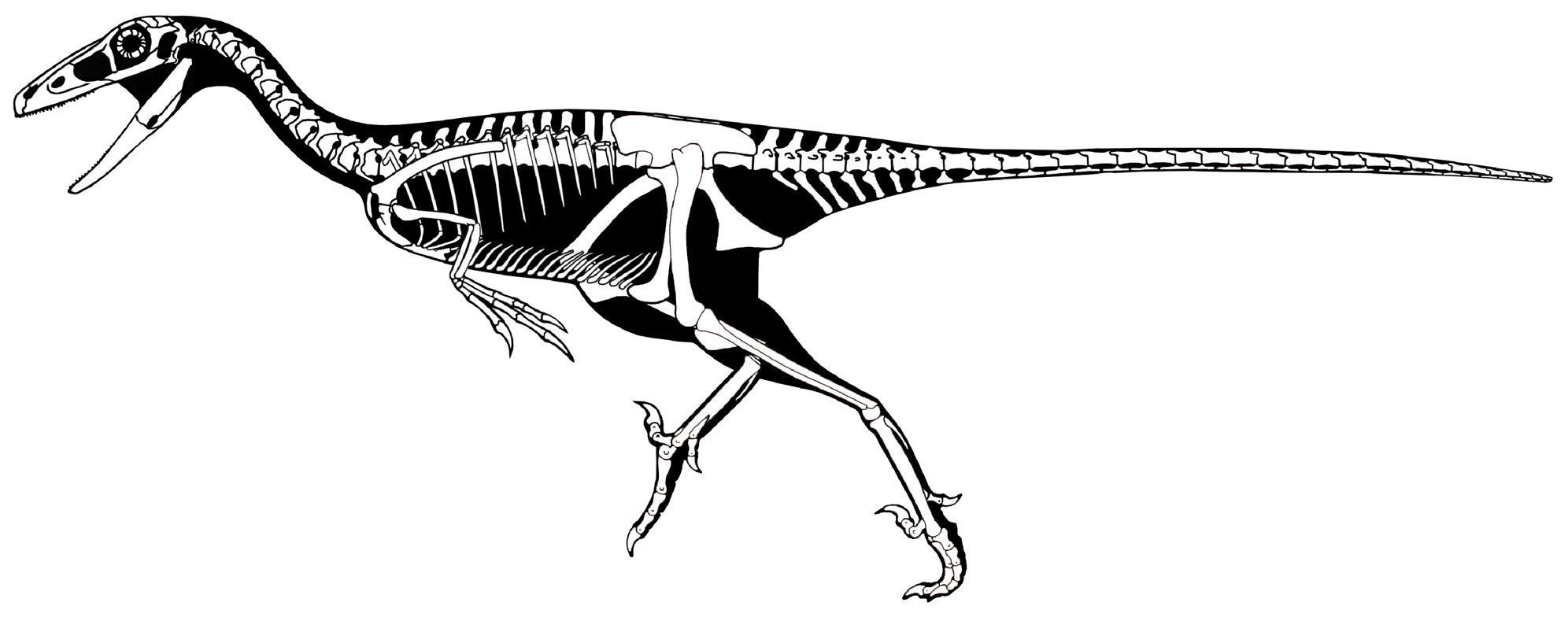 Troodon inequalis