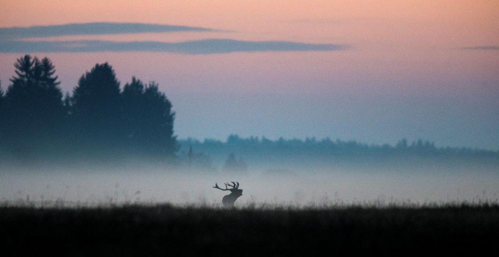 L'automne en Biélorussie
