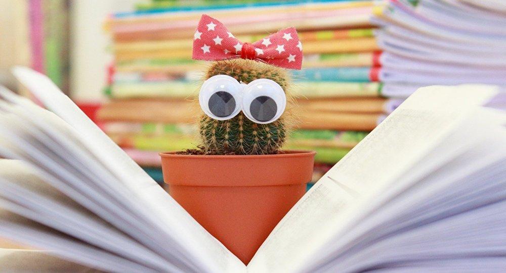 Un cactus devant un livre