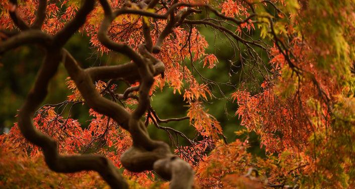 automne, image d'illustration