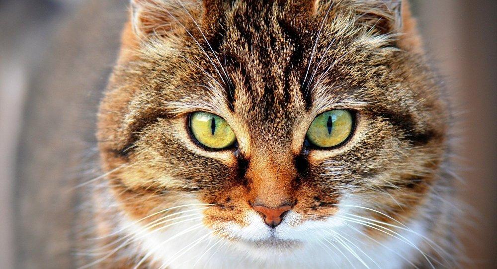 en ligne datant Dame de chat