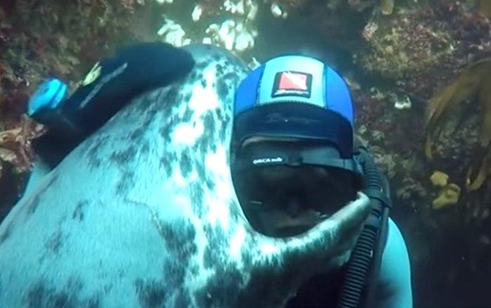 L'amitié entre un phoque et un homme, ça existe!