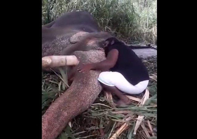 Une berceuse… pour un éléphant