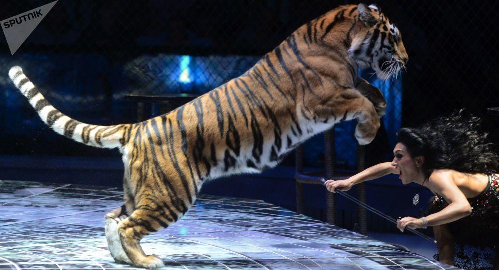 cirque, dressage d'animaux sauvages