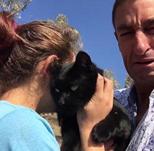 Retrouvailles touchantes avec un chat survivant d'un incendie de forêt