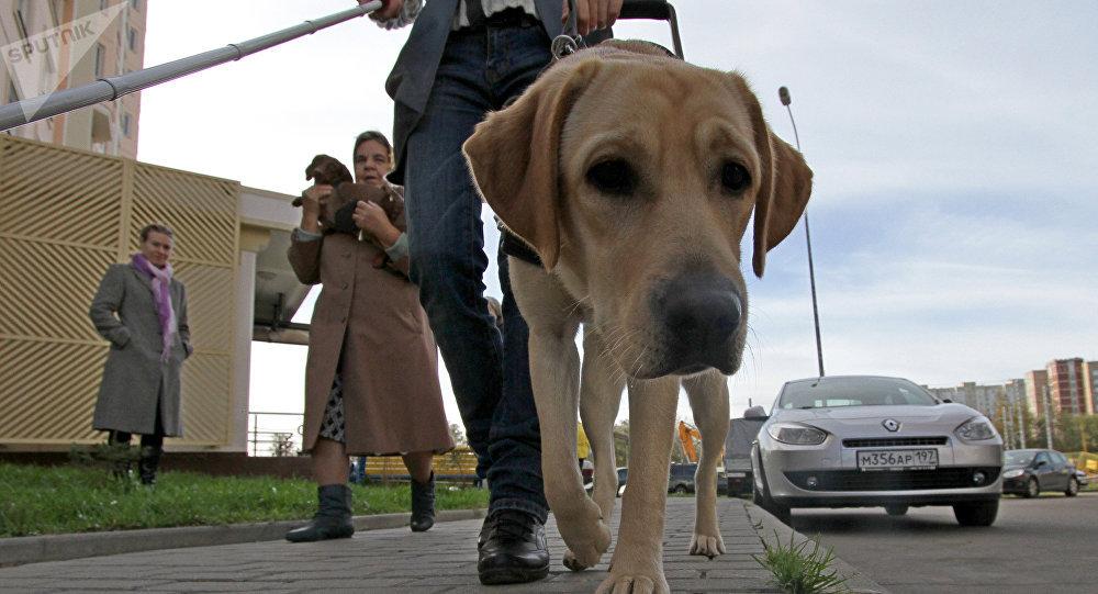 Un chien guide, image d'illustration