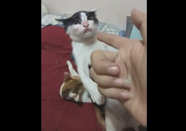 Un chaton talentueux «joue le mort» avec brio
