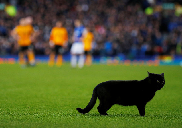 Un chat noir débarque en plein match de football