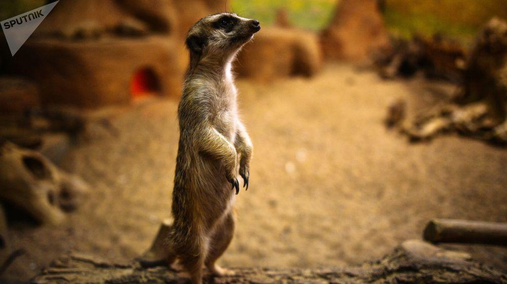 Le Zoo de Moscou fête ses 155 ans