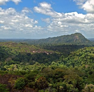 Forêt amazonienne