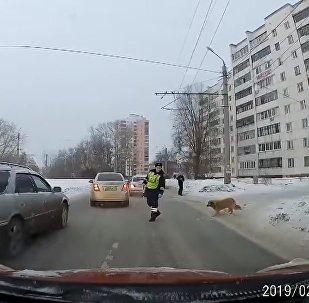 Un policier de la route aide un chien à traverser une rue
