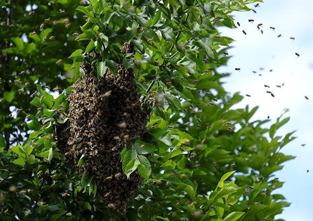 Une ruche d'abeilles sauvages