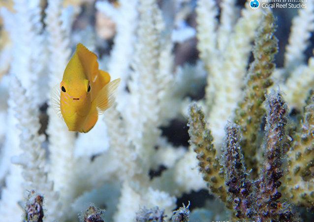 Des récifs coralliens
