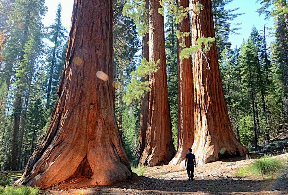 Fascinante beauté des arbres les plus incroyables de la planète