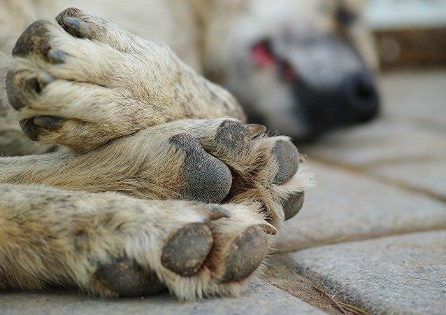 Des pattes d'un chien