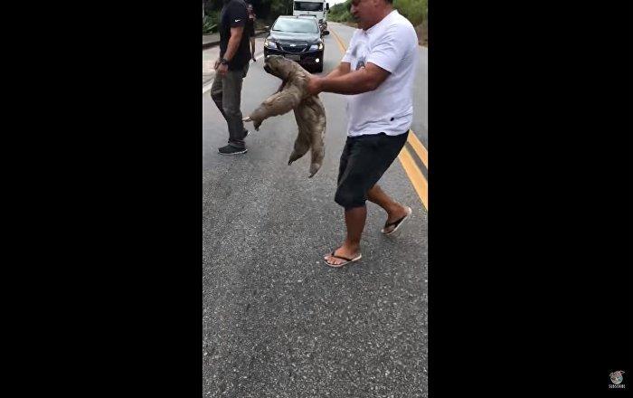 Helping a Sloth Cross the Road || ViralHog