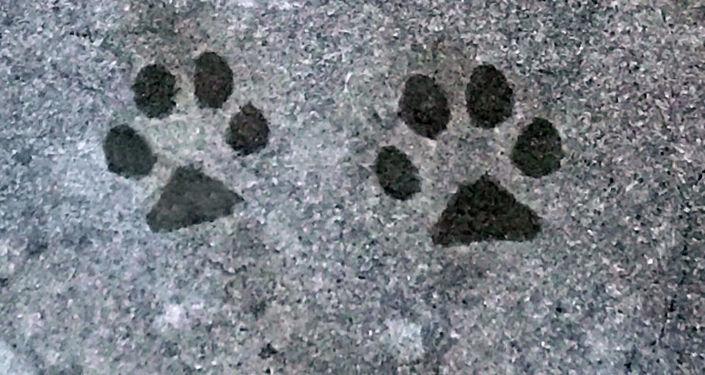 Les empreintes de chien (image d'illustration)
