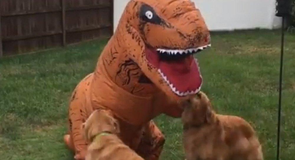 D'adorables golden retrievers jouent avec un «dinosaure»