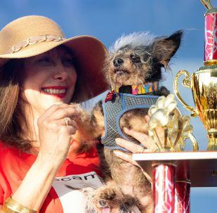 L'édition 2019 du concours du chien le plus laid du monde