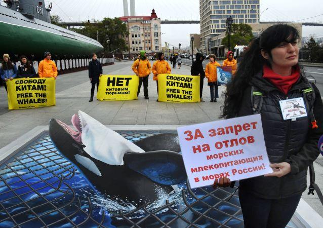 Manifestation contre la «Prison aux baleines»