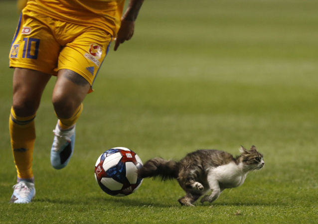 Jul 24, 2019; Salt Lake City, UT, USA;  A cat disrupts play in the second half between Tigres UANL and the Real Salt Lake during their Leagues Cup game at Rio Tinto Stadium.