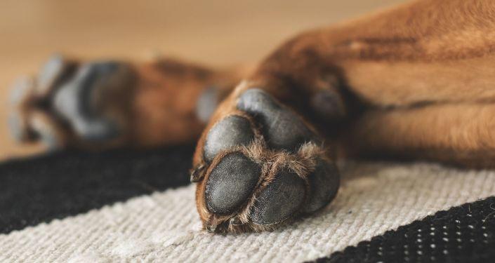 pattes d'un chien (image d'illustration)