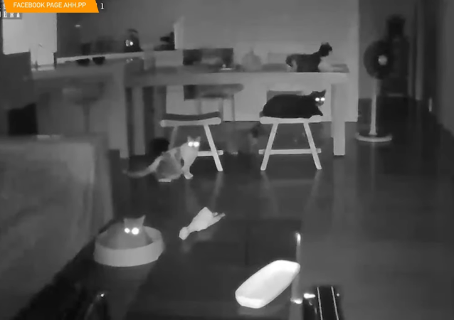 La réaction de chats quelques secondes avant le début d'un séisme