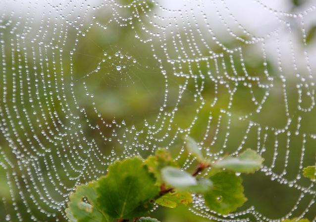 toile d'araignée (image d'illustration)