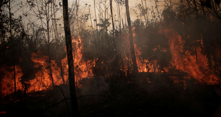 forêt amazonienne en flammes, Porto Velho, Brésil, le 23 août 2019.