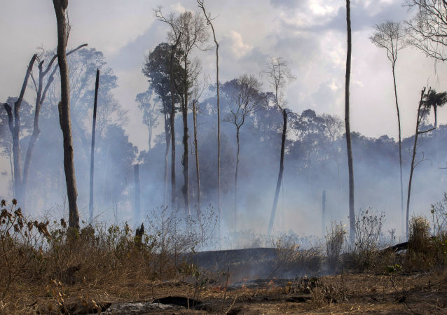 Les incendies d'Amazonie
