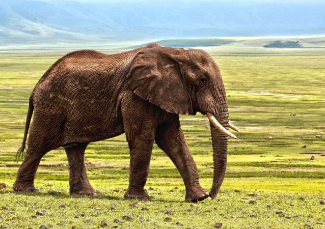 Un éléphant (image d'illustration)