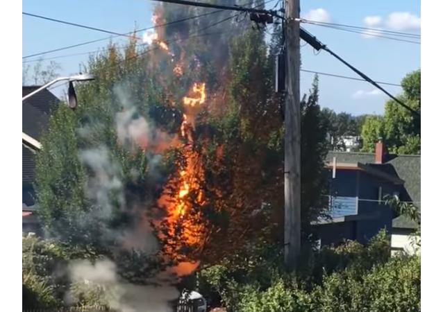 Éblouissant mais dangereux! Une ligne électrique transforme un arbre en fusible