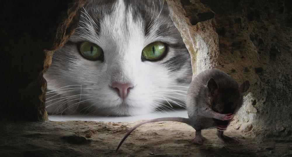 un chat et un rat