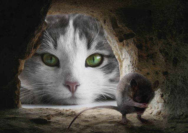 un chat et un rat
