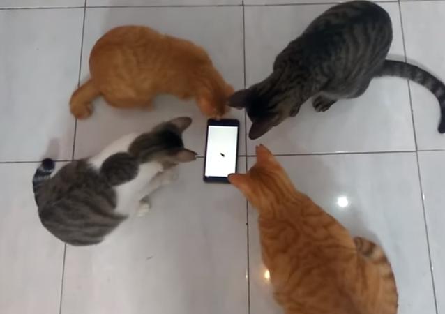 Quelque chose ne va pas avec cet insecte! Quatre chats essayent de l'attraper alors qu'il déambule sur un smartphone