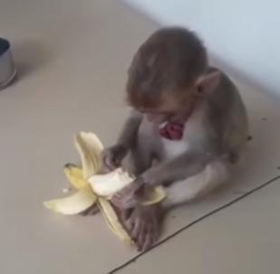 Un moment qui rechauffe le cœur: ce chien sauve un bébé singe et l'emmène à la police