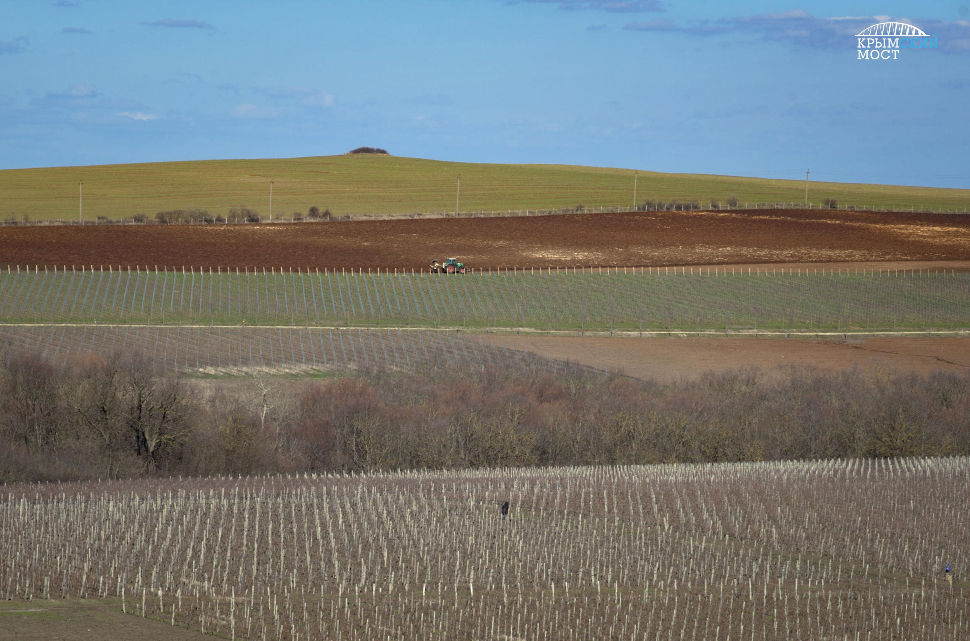 les vignes de Crimée